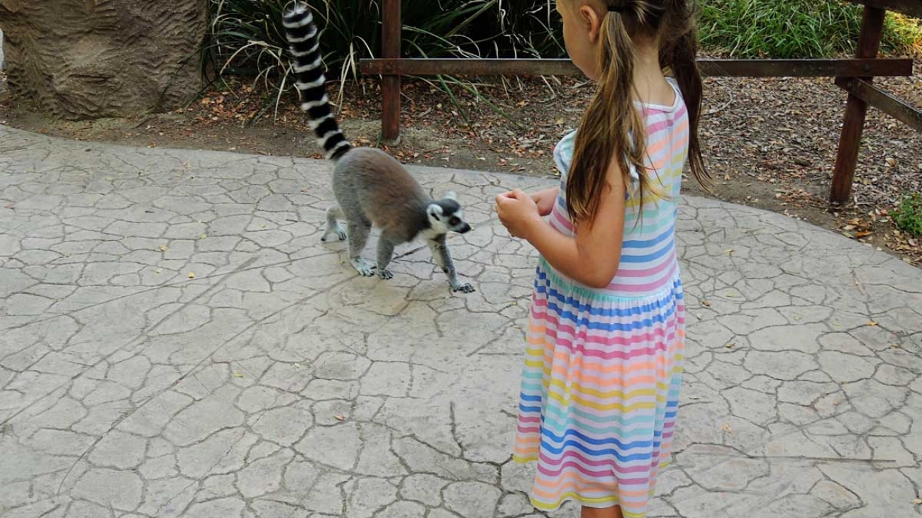 Lemur-walk-safari-park