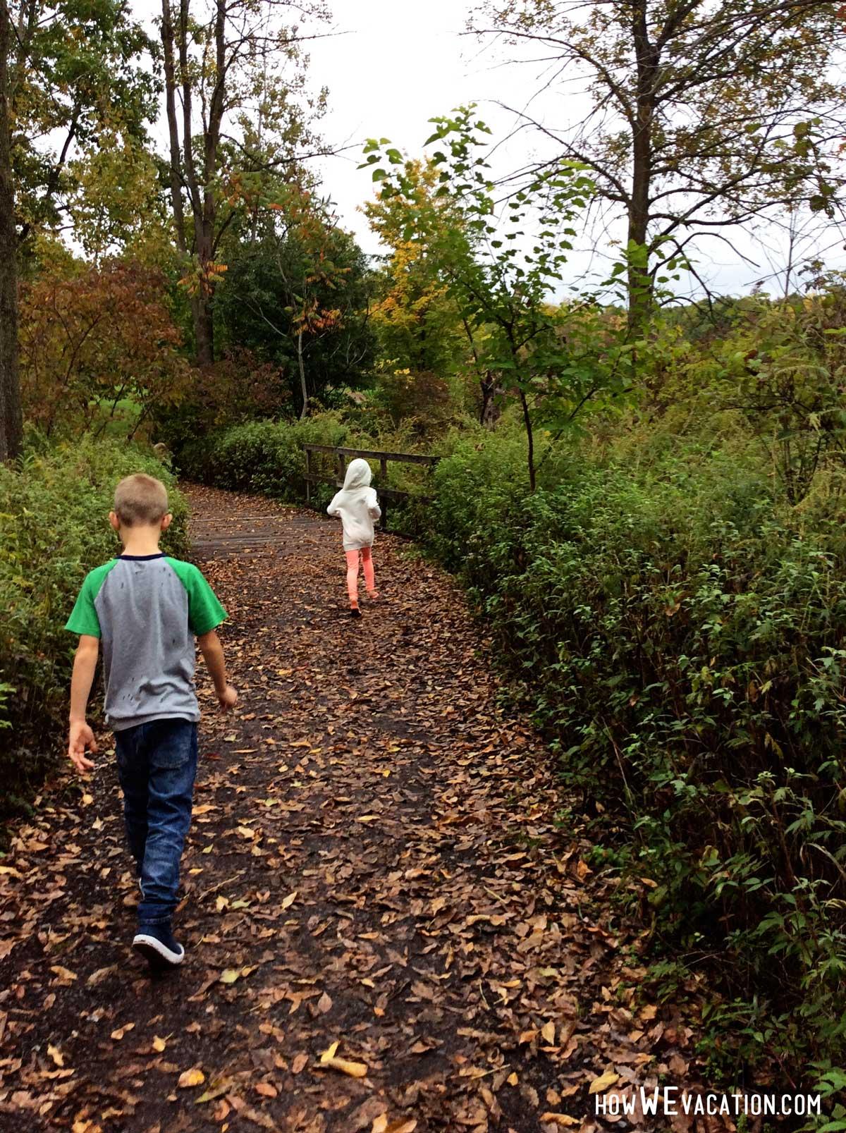 Walking through the Sacred Grove