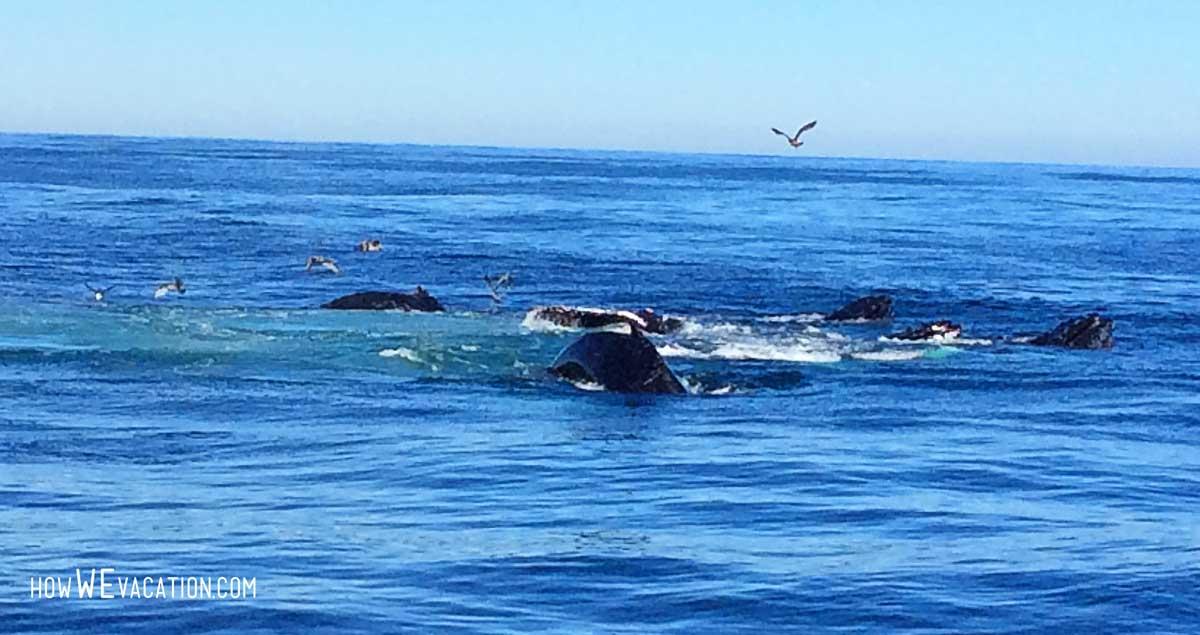 humpback whales boston