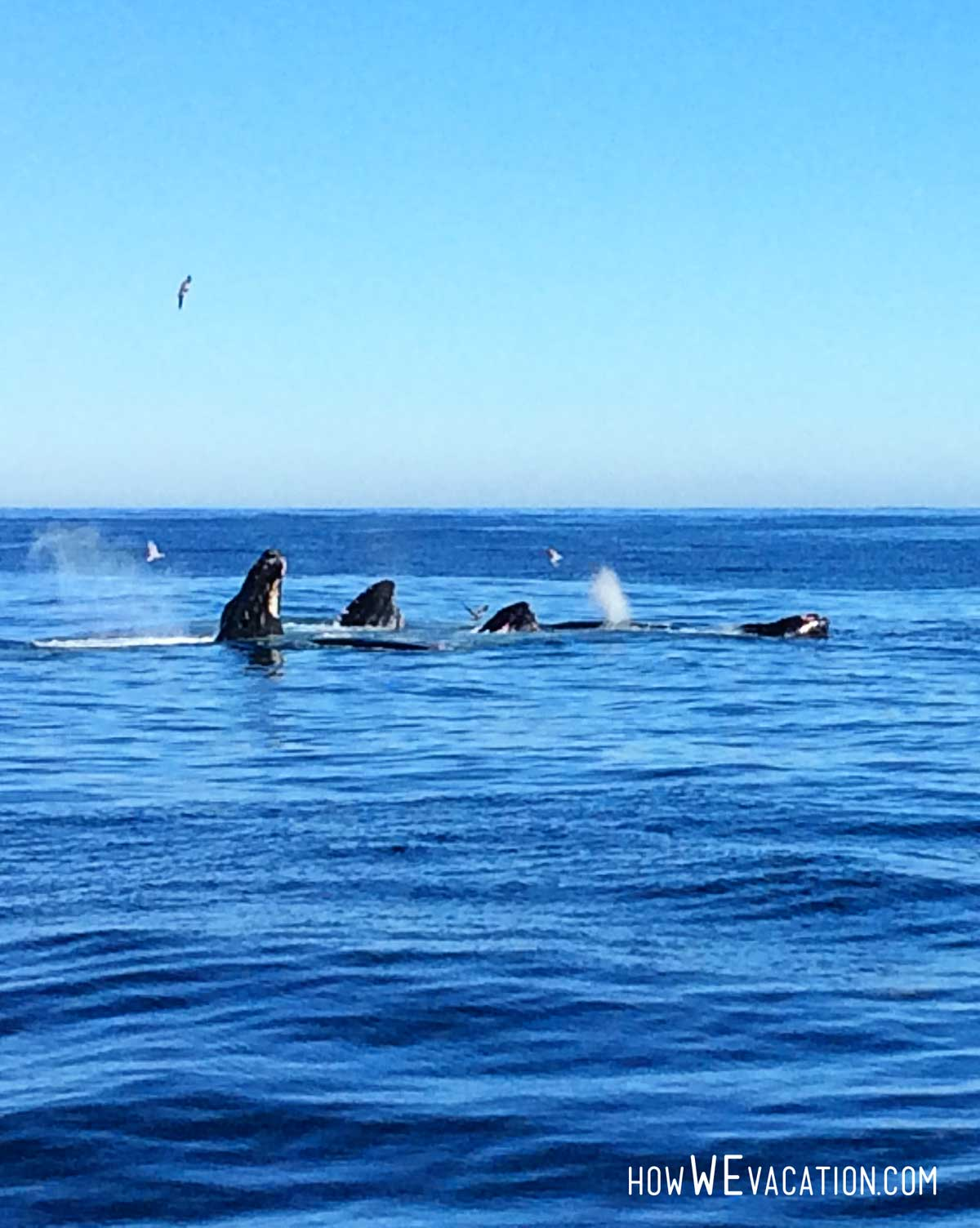 boston harbor cruises whales