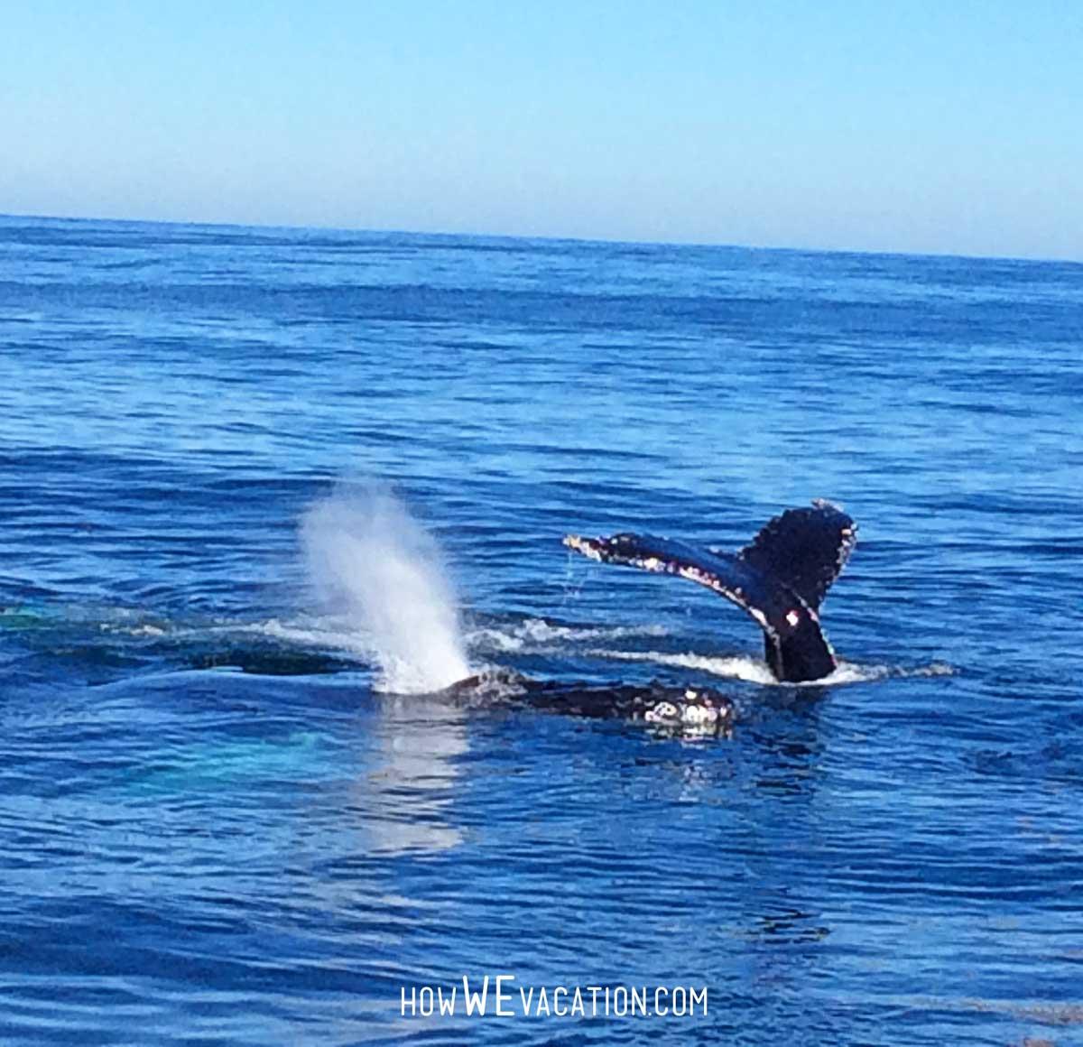 humpback whales in boston
