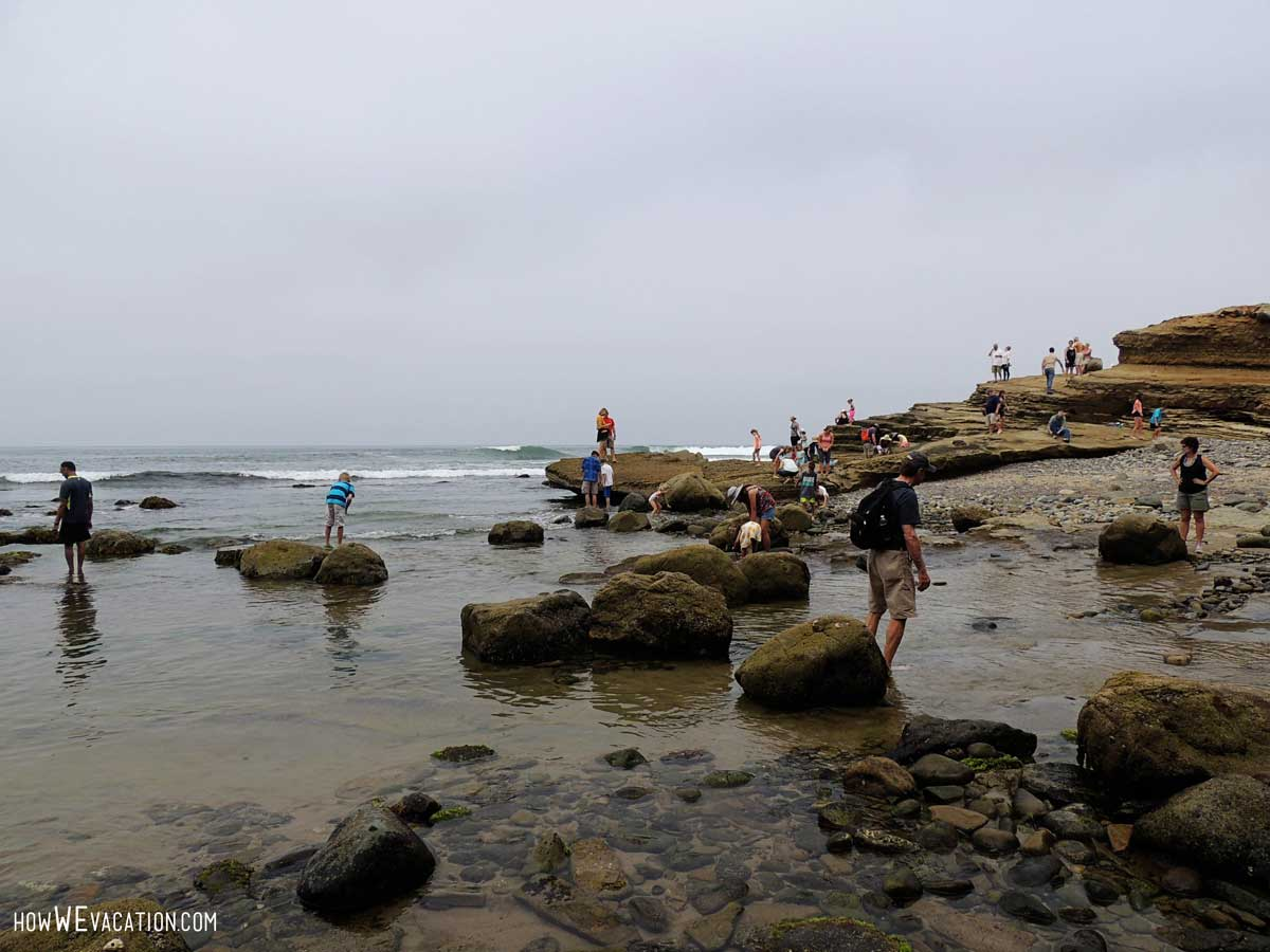 cabrillo tide pools, san diego
